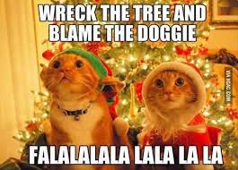 Funny Christmas Cat Memes - why are cats afraid of green cucumber funny animal pictures