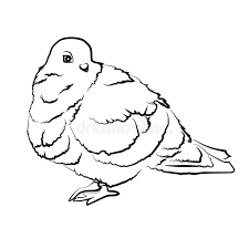 sketch shape dove bird poultry beast icon cartoon design abstract