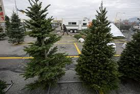 christmas tree prices christmas tree shortage driving up prices putting some utah tree