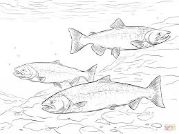 images of salmon coloring pages animal coloring pages free
