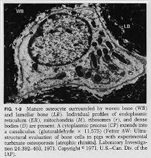 Normal Bone Anatomy And Physiology 01f3 Jpg