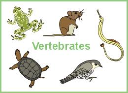 kingdom animalia vertebrates mrs lp u0027s 7th grade science page
