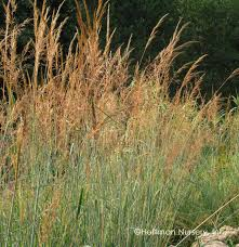 tennessee smart yards native plants blue indian grass all the best grass in 2017