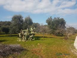Land Plots For Sale by Sale Land Plots With Centuries Old Olive Groves Latiano Secular