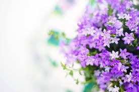 purple flowers purple flowers summer free photo on pixabay