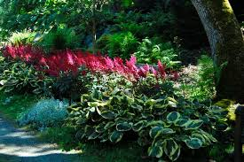 10 Best Perennials And Flowers by Perennials For Shade In Dry Or Moist Areas A Toronto Master