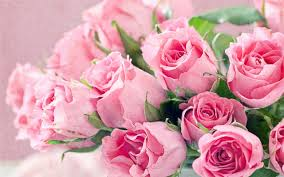fresh flowers bouquet of pink roses hd desktop backgrounds free