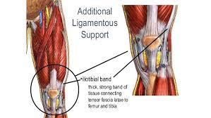 Knee Anatomy Pics 01 Knee Anatomy