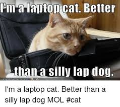 Cat Laptop Meme - pina laptop cat better than a silly lap dog igrinha i m a laptop cat