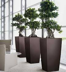 plant for office commercial exotic plants