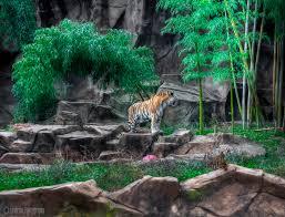 South Carolina wild animals images South carolina zoo by va guy jpg