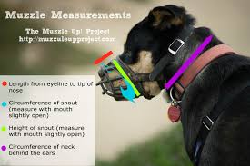 muzzle faqs measuring for a proper fit the muzzle up project