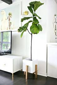 indoor ceramic plant pots ceramic plant pots architectures tall