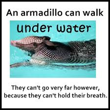 Armadillo Meme - armadillos under water