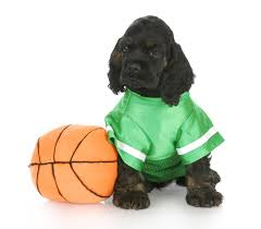 halloween background puppy 11 athletic costumes so your dog can score some major halloween