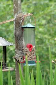 northwood commons backyard bird blog a feature of wild birds