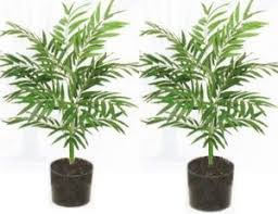 artificial croton plants croton plant outdoor