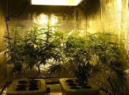 400 Watt Hps Grow Light 600w Hydroponic Grow Journal 23 09 Oz Harvest Grow Weed Easy