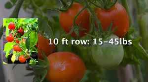 growing enough food to feed a family how much do you need to
