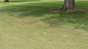 meadowbrook country club golf course maintenance tree management