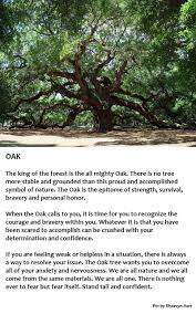 symbolism trees oak tree symbolism stand tall pinteres