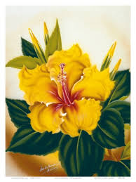 Yellow Hibiscus Flowers - the 25 best yellow hibiscus ideas on pinterest hibiscus flowers