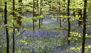 Landscape Canvas Prints by Flowers Canvas Prints Lifeposters