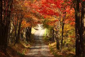 fall foliage app leaf peeping england wicked good