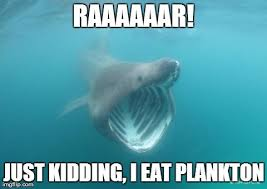 Funny Shark Memes - what can the funniest shark memes on the internetz teach us about