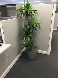plants for office hangzhouschool info part 16