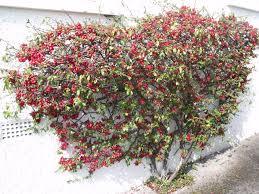 garden and plant info u2013 grangegardener u0027s blog