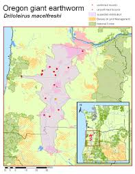 Oregon Time Zone Map by The Xerces Society Worms Oregon Giant Earthworm Driloleirus