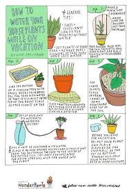Best Plants For Air Quality by 6 Diy Tips For Watering Your Houseplants While Away On Vacation