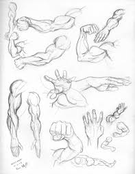friday u0027s sketches for anatomy practice week arms and hands some