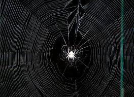 Spider Web Decoration For Halloween Halloween Decoration Shibumo