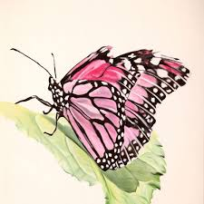pink butterfly series17 prints and