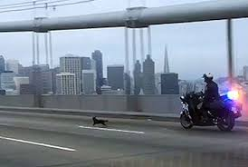 Policial resgata cão em ponte entre São Francisco e Oakland ...
