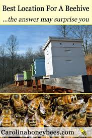 choosing the best location for a beehive charlotte carolina