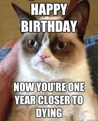 Grumpy Cat Birthday Memes - hahahahah time to laugh pinterest grumpy cat cat and memes