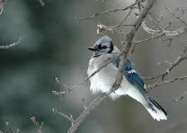 blog posts birds in the yard