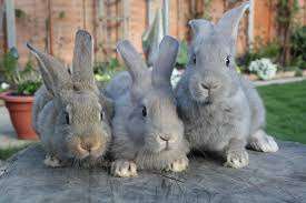 rabbit rabbit rabbit rabbit rabbit just a mixed bag of thoughts