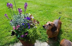poisonous plants for dogs learn to protect your pooch in nature