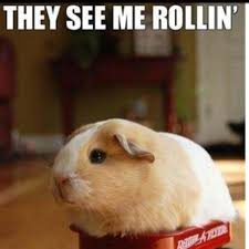 They See Me Rollin They Hatin Meme - hey see me rollin they hatin hilarious pinterest animal