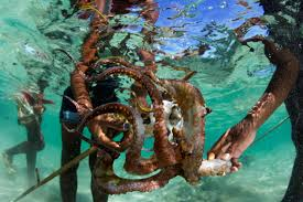 new project to map octopus fishing in the western indian ocean