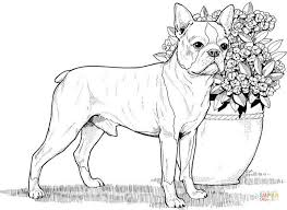 boston terrier coloring free printable coloring pages