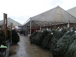 christmas tree at lowes christmas lights decoration