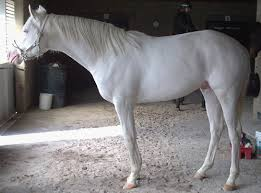 rare horse colors u2013 the facts the equinest