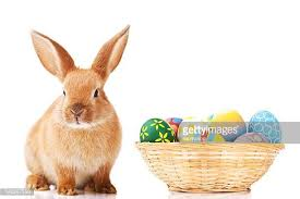 easter easter bunny easter bunny stock photos and pictures getty images