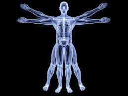 Human Anatomy Flashcards Anatomy Study Cards Anatomy Flash Cards Massage Therapy Youtube