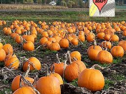 mapping 20 pumpkin patches nearest washington d c